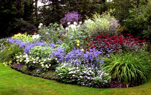 Planting Under Pine Trees : Kolibri kert?szet a n?v?nyek helyes kiv?laszt?sa
