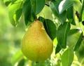 Biotippek a gyümölcsösben